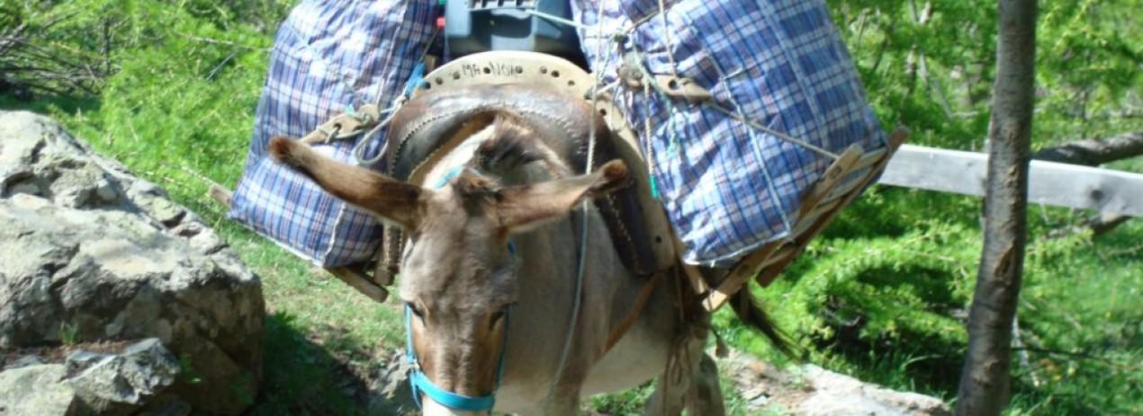 montée en âne à Dormillouse