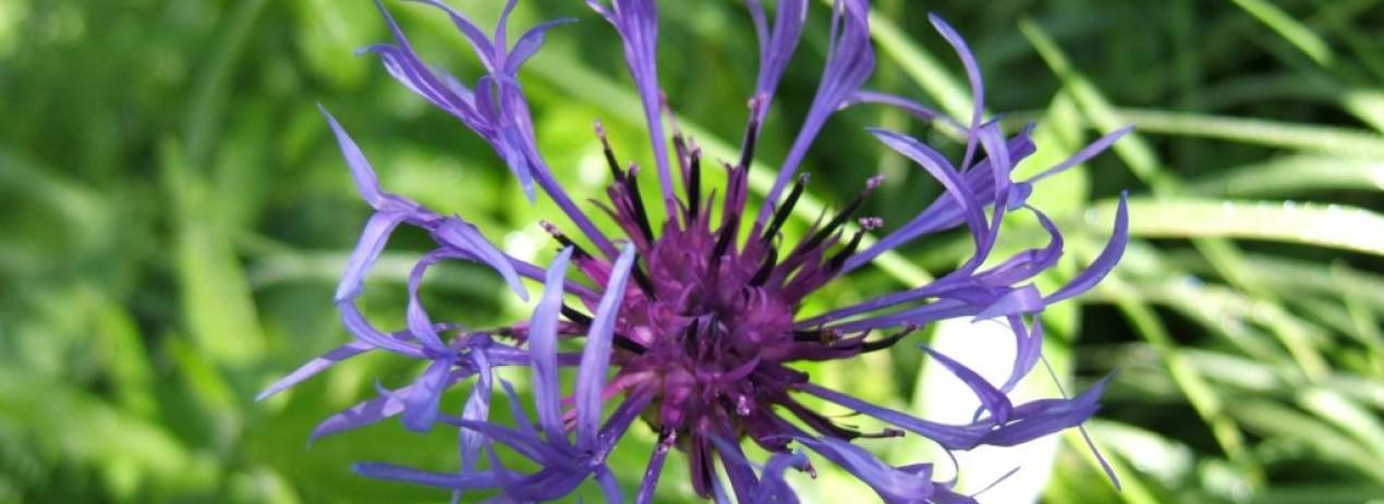 une passion les fleurs